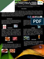 CARTEL DE MICROBIOLOGIA.pdf