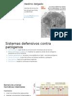 Protección Del Intestino Delgado Néstor