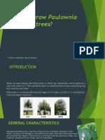 Why to Grow Paulownia Trees