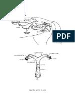 Scheme obstetrica