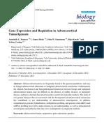 Gene Expression and Regulation in Adrenocortical Tumorigenesis