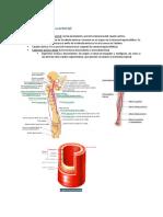 Patología Quirúrgica Arterial