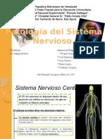 Patol. Sistema Nervioso Definitivo (1)
