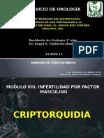 Criptorquidia, Torsion Testicular