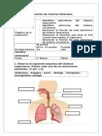prueba de circulatorio.docx