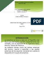 Presentación Practica Uno- Nicole Maldonado