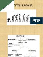 2.-+Evolución+humana+2014