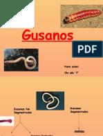 1 Gusanos Biologia 090604125254 Phpapp01