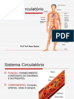 Slides Sistema Circulatorio