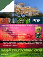 Tema 1; Introduccion Al Estudio de La Anatomía y Morfología Vegetal