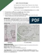 life cycle of funaria