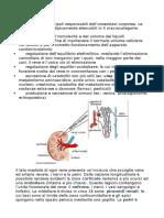 Anatomia e Fisiologia Del Rene Prof.papetti
