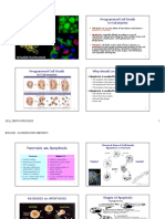 cell-death-process.pdf