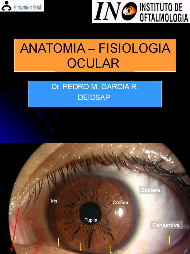 Excepcional La Anatomía Y La Fisiología De La Oftalmología Imágenes ...