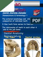 Human Dentition