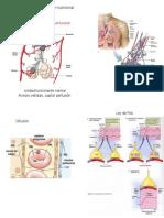 circulación nutricional.pptx