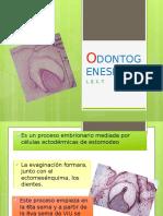 odontogenesis-140416172437-phpapp02