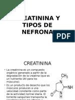 Creatinina y Tipos de Nefrona