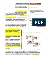 HPB 1.1