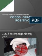 Cocos__gram_positivos.pptx