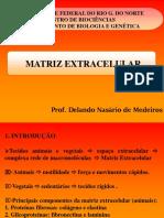 Aula 14 Matriz Extracelular-ZOOTEC-16.1 (1)