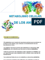 metabolismo  ANA.ppt