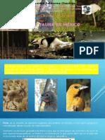 2Flora y Fauna