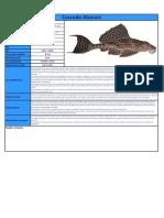 Cascudo Abacaxi.pdf