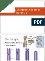 unidad 2- Aspectos citogenéticos de la herencia U2.pptx