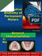 Anatomy of Peremanent Molars