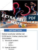 Extra Cellular Matrix 22062012