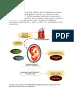 Dua Mekanisme Potensial Telah Diajukan Untuk Menjelaskan Hubungan Yang Mendasari Antara Kesehatan Mulut Dan Hasil Kehamilan Yang Merugikan