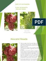Variedades de Uva Pisquera