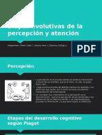 Etapas Evolutivas de La Percepción y Atención