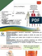 anatomia y filosofia