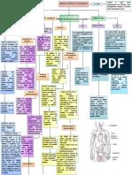 Sistema Linfoide (Inmunitario)