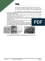 a14_mitocondriacatabolismo (1)