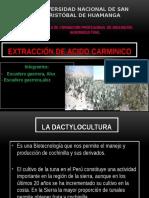 DACTYLOCULTURA.pptx