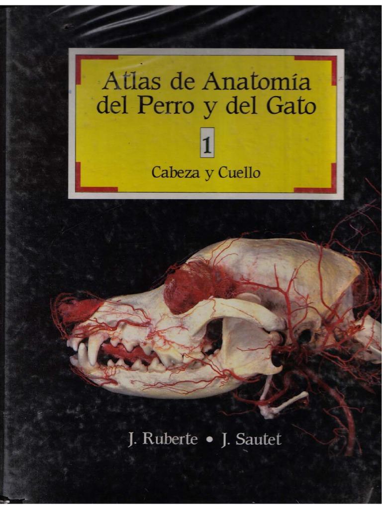 Atlas de Anatomia Del Perro y Gato I
