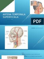Artera Temporala Superficiala (1)