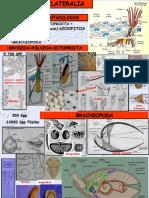 19bilateriales, celomados.pdf