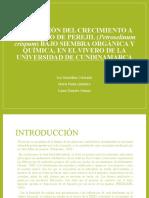 investigacion-i diapositivas pis ii