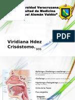 Proceso Inflamatorio de La Faringe y Amigdalas (Viry H. Crisostomo)