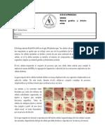Ciclo celular, Mitosis y cáncer (1)
