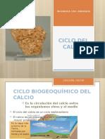 CICLO BIOGEOQUÍMICO DEL CALCIO.pptx