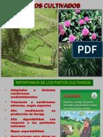 Características de Pastos Cultivados en las zonas altoandinas