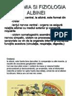 Anatomia Si Fiziologia Albinei