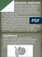 Organe Genitale