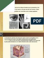 lofoscopia.pptx