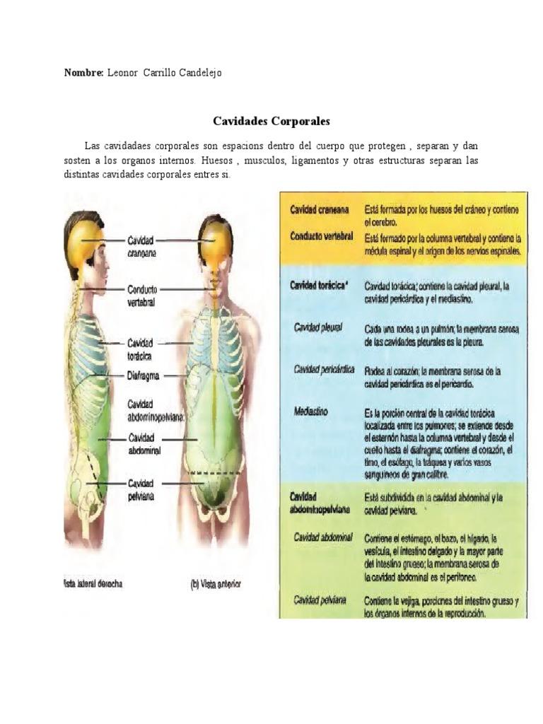 Perfecto Diagrama De Cavidades Corporales Imágenes - Anatomía de Las ...